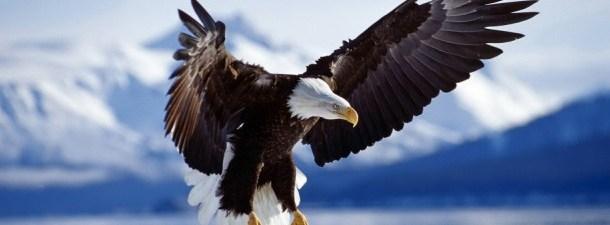 As águias, os soldados do futuro