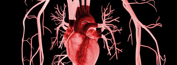 Os parches biônicos para o coração poderiam ser uma grande alternativa aos transplantes
