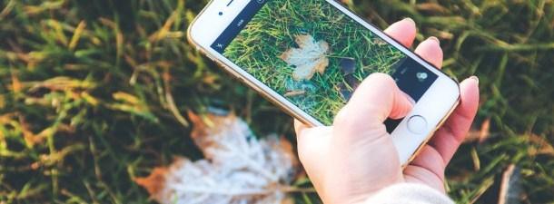 O aplicativo que identifica plantas