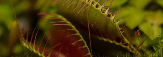 Os segredos das plantas carnívoras, captados pela ciência