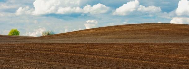 Como é a inovação no setor da indústria agroalimentária?